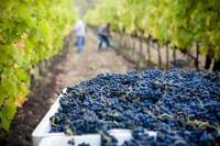 Blueberry Farm Workers Get $350,000 for Sexual Harassment Claims